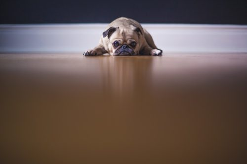 blog sad puppy on floor