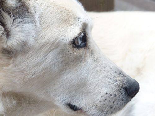 blog sad scared dog
